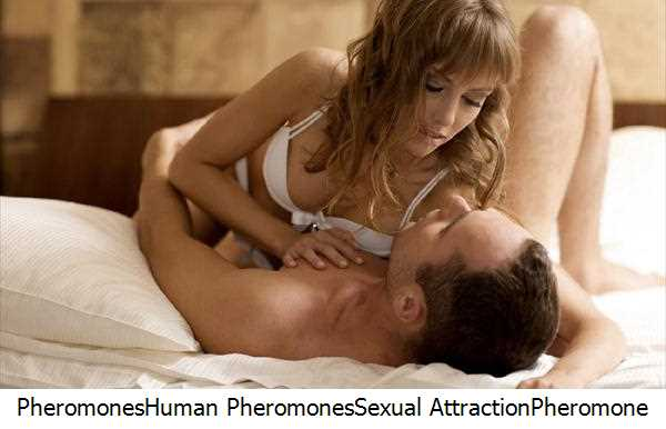 Pheromones,Human Pheromones,Sexual Attraction,Pheromone Cologne,Pheromones Attract,Human Body,Attractants,Androstenone