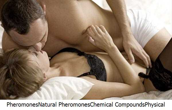 Pheromones,Natural Pheromones,Chemical Compounds,Physical Attraction,Sexual Attraction,Vomeronasal Organ,Pheromones Perfume